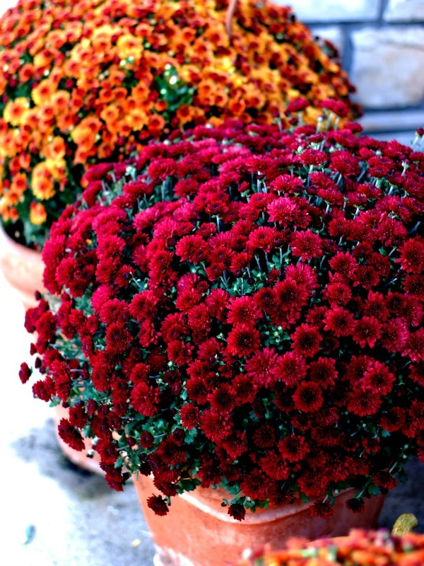 Red Best Flowers