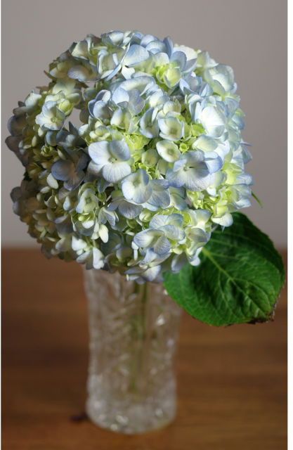 Delicate Cheap Flowers Delivered