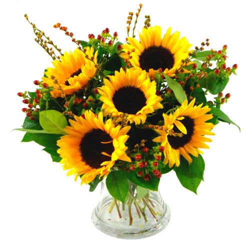 Sun Flowers Free Delivery