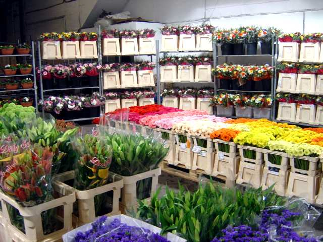 Beautiful Flowers Wholesale