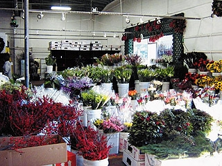 Bewitching Wholesale Flowers For Weddings