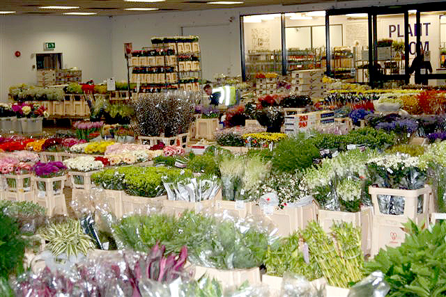 Amazing Wholesale Flowers